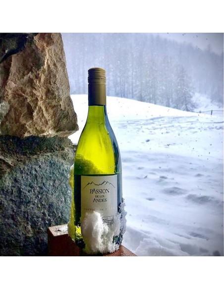 Sauvigon Blanc dans la neige
